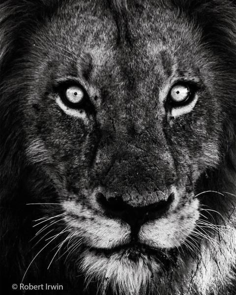 野生の動物達の画像(17枚目)