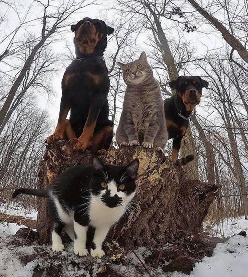 動物達の集合写真の画像(3枚目)