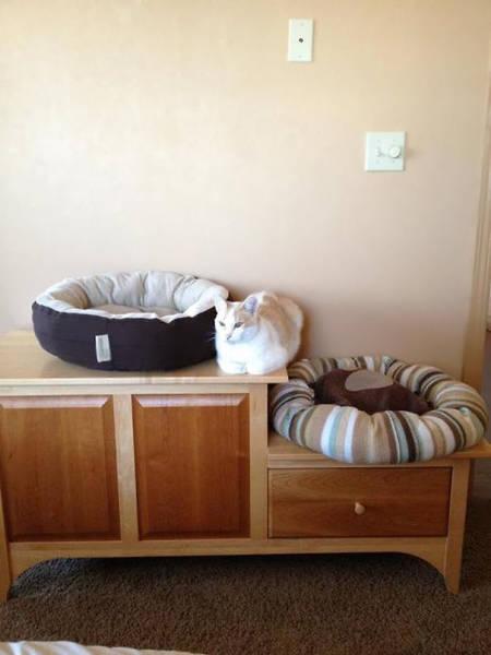 にゃんとも言えない、ちょっと困った猫の画像の数々!!の画像(23枚目)