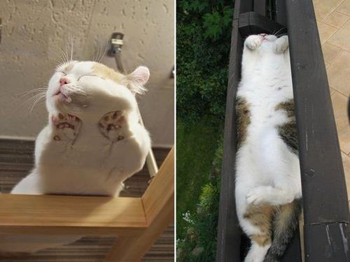 器に入った猫の画像(10枚目)