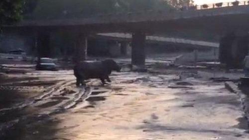 洪水で動物達が大脱走した時の写真の数々wwの画像(8枚目)