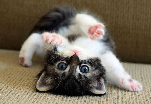 kittens_12