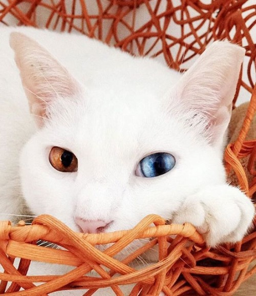 かわい過ぎる猫ちゃんの画像(8枚目)