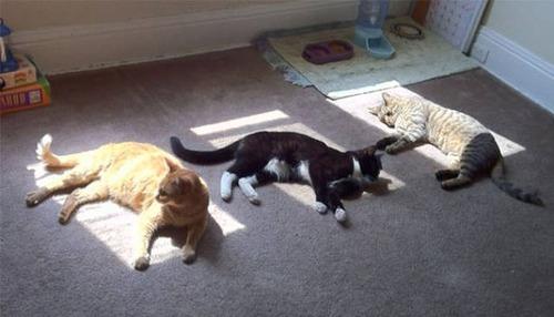 神々しい猫の画像(40枚目)