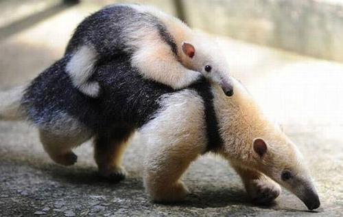 色々な動物の親子の癒される画像の数々!!の画像(10枚目)