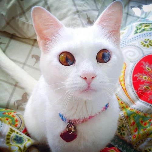 かわい過ぎる猫ちゃんの画像(14枚目)