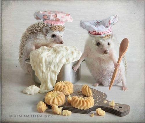 secret_world_of_hedgehogs_07