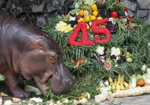 動物達の誕生日の写真の数々!!の画像(34枚目)
