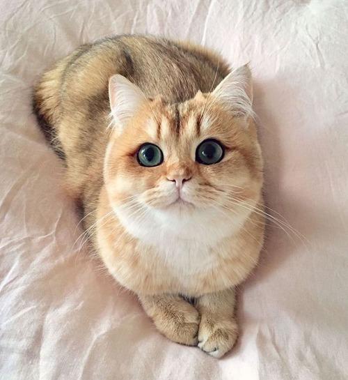 かわい過ぎる猫ちゃんの画像(4枚目)