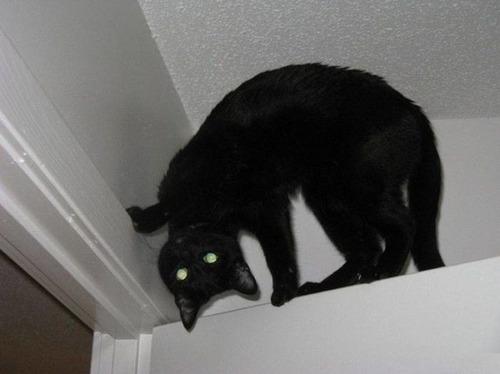獲物を狙うかわいいネコの画像(12枚目)