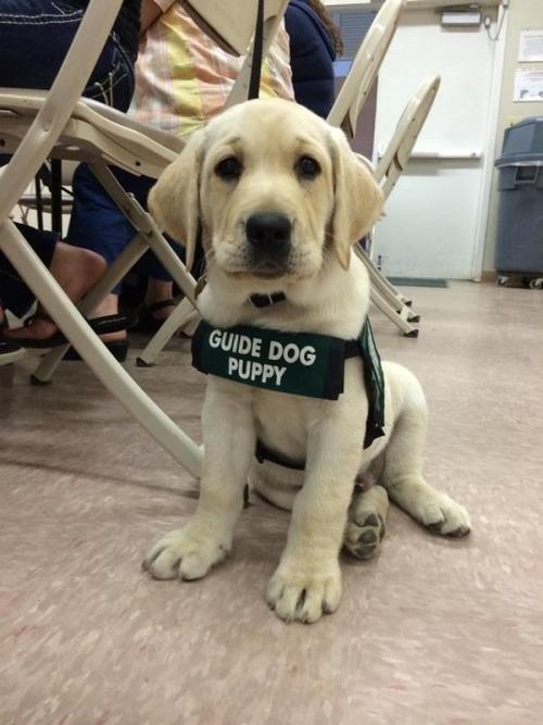 かわい過ぎる子犬の画像の数々!の画像(98枚目)