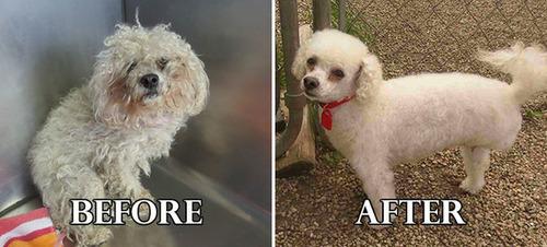 捨て犬の毛をキレイにカットしてるビフォーアフターの画像の数々!!の画像(18枚目)