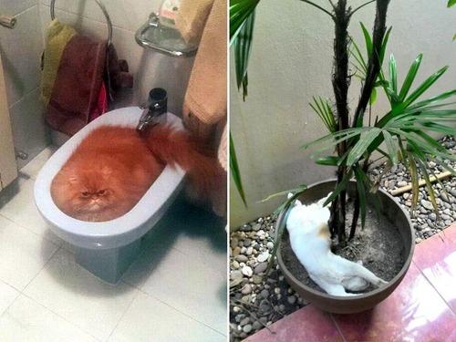 器に入った猫の画像(5枚目)