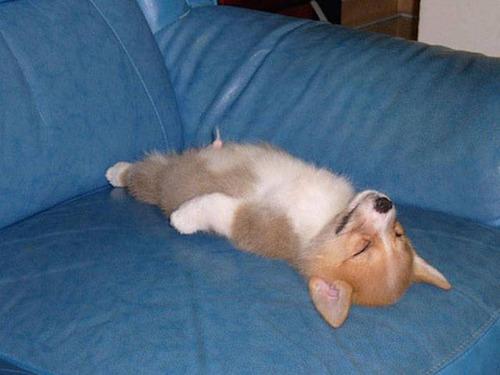 どこでも寝れる!?どこでも寝てる可愛い犬の画像の数々!!の画像(20枚目)