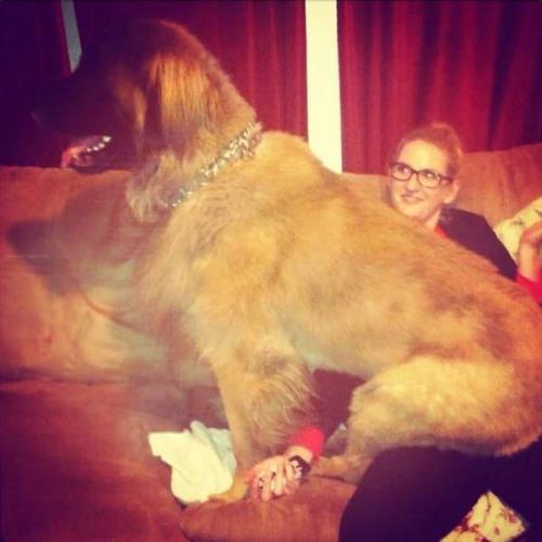 巨大な犬の画像(35枚目)
