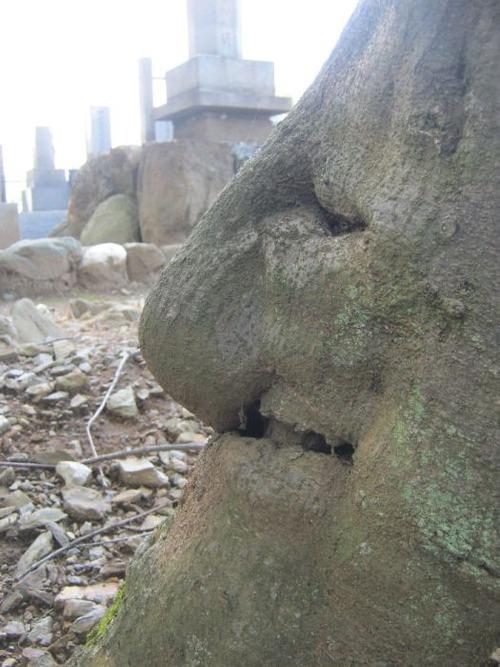 不気味な形の樹木の画像(21枚目)
