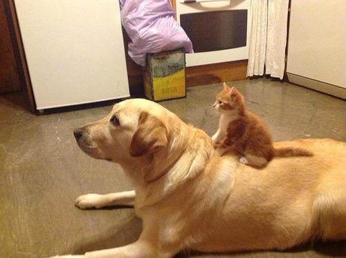 ほのぼのする!仲の良い犬と猫の画像の数々!!の画像(32枚目)