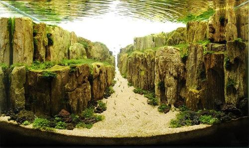 美しく神秘的な水辺の画像(5枚目)