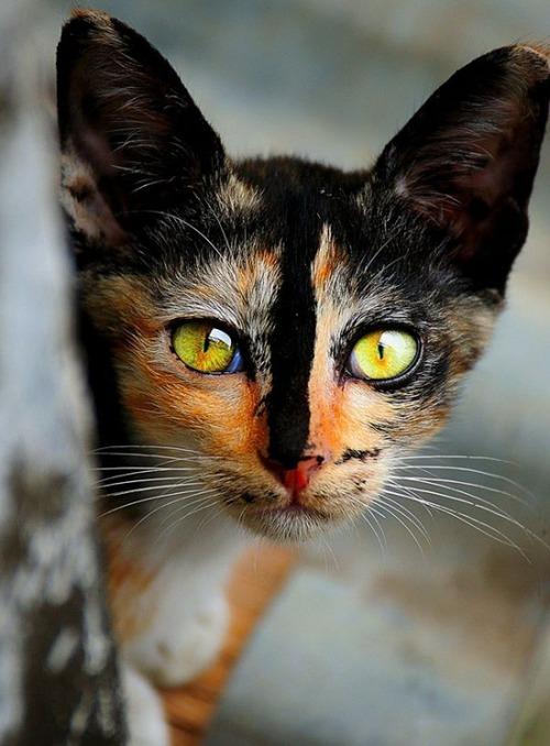 かわい過ぎる猫ちゃんの画像(5枚目)