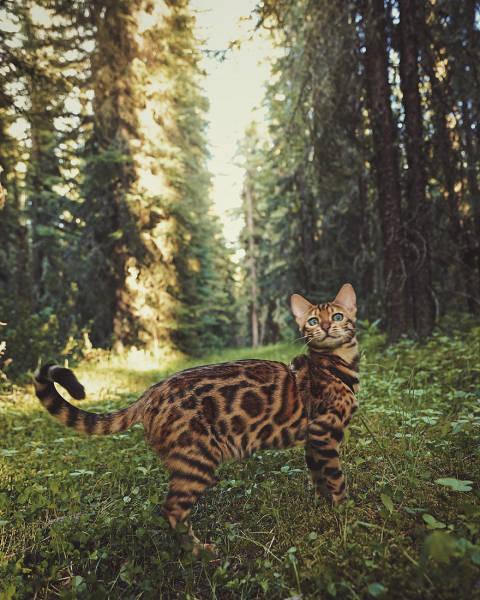 美しい風景と猫の画像(20枚目)