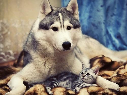 ほのぼのする!仲の良い犬と猫の画像の数々!!の画像(28枚目)