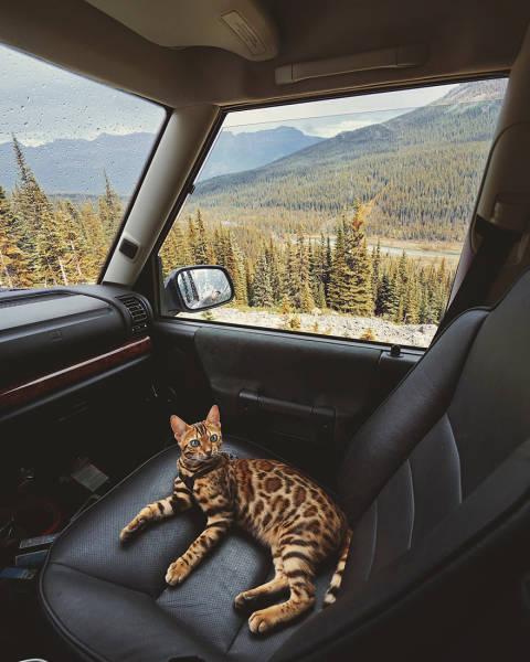 美しい風景と猫の画像(15枚目)