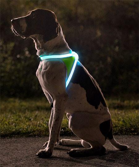 暗い夜でもよく光る!光る犬用のベストがカッコいい!!の画像(2枚目)
