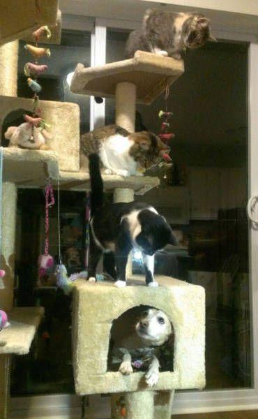 猫と勘違いをしている犬の画像(3枚目)