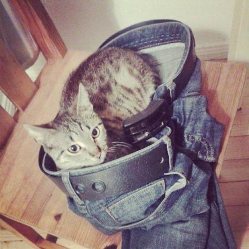 にゃんとも言えない、ちょっと困った猫の画像の数々!!の画像(37枚目)