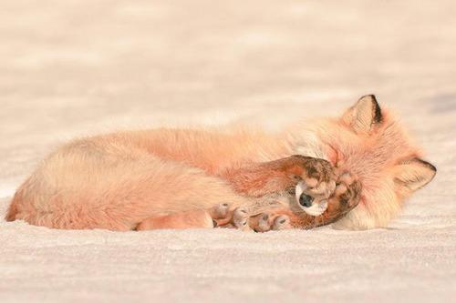 ほのぼのする野生の動物たちの画像の数々!の画像(12枚目)