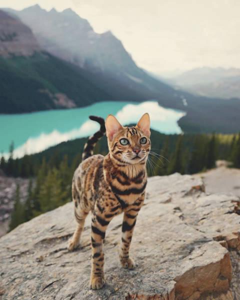 美しい風景と猫の画像(5枚目)