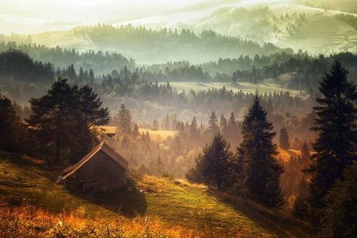 森の中の隠れ家の画像(10枚目)