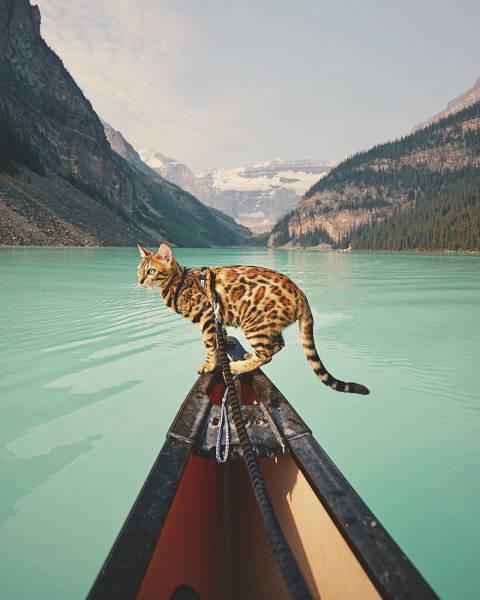 美しい風景と猫の画像(30枚目)