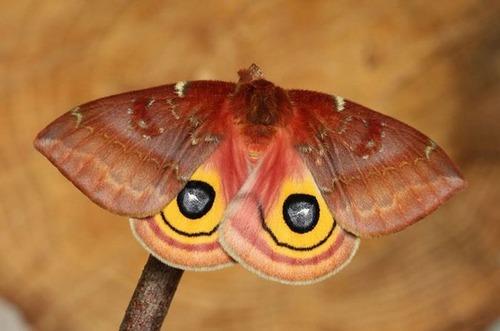 怪しすぎる見た目の昆虫の画像(4枚目)