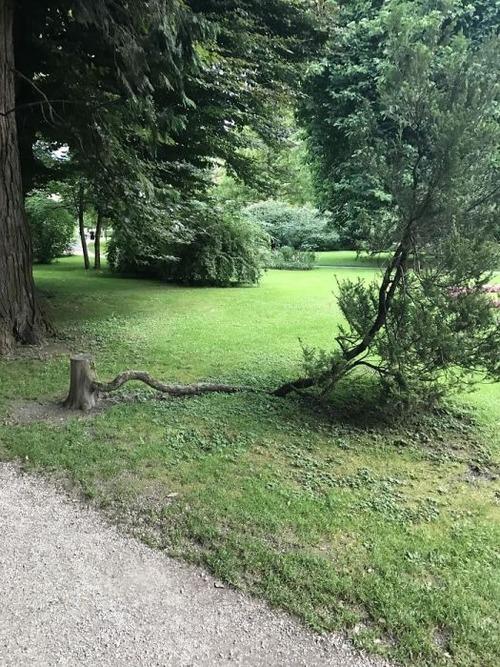 生えている樹木の画像(10枚目)