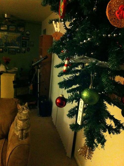 ペットと過ごすクリスマスの画像(4枚目)