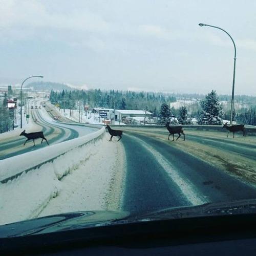 冬を楽しむカナダの人達の画像(39枚目)