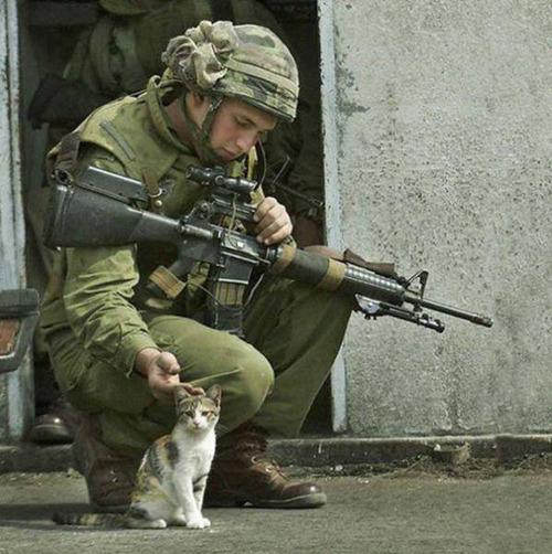 戦場にもネコは居る!!極限状態でも癒される戦場のネコの画像の数々!!の画像(1枚目)