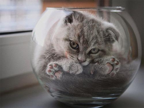 器に入った猫の画像(1枚目)