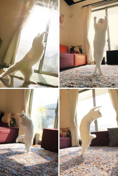 神々しい猫の画像(42枚目)