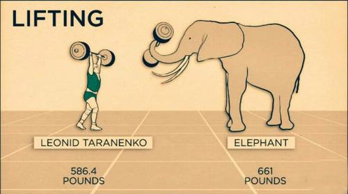 やっぱり勝てない・・・人間と動物の身体能力の比較画像の画像(2枚目)