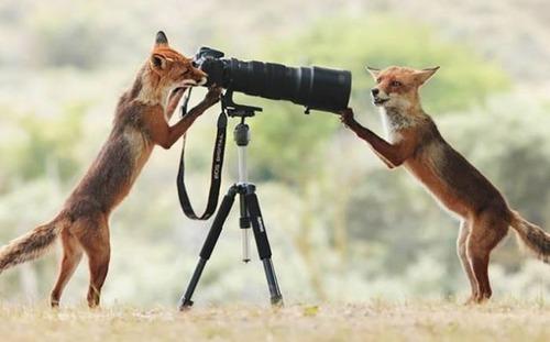 カメラが捕らえた決定的瞬間の画像(27枚目)