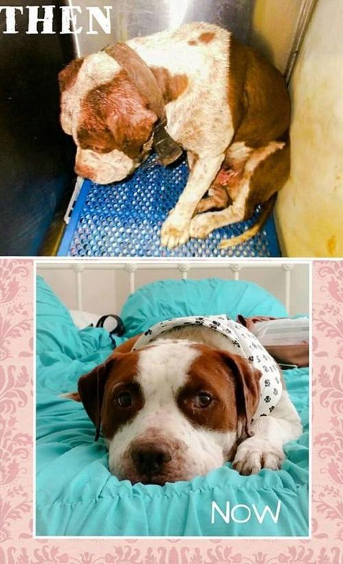 ホッとする!ノラ犬の飼主が見つかるビフォーアフターの比較画像!!の画像(9枚目)