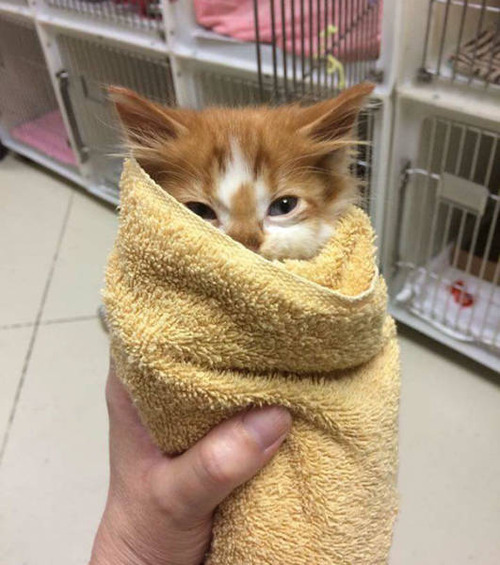 kittens_29