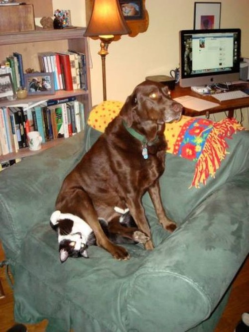 猫と犬の力関係の画像(17枚目)