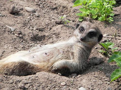 面倒くさい…疲れた…眠い…そんな感じの動物たちの画像!!の画像(24枚目)
