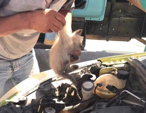 自動車の中に潜んでいる動物達の画像(8枚目)
