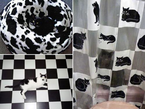 隠れているつもりの猫の画像(6枚目)