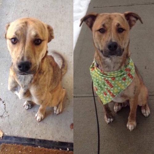 捨犬の時と良い飼主が見つかった時のワンちゃんのほのぼの比較画像の数々!!の画像(9枚目)
