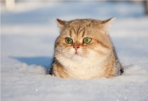 動物の気持ちが読める!何か言いたそうな動物の画像の数々!!の画像(8枚目)